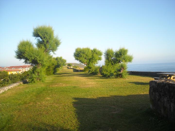 Un verde argine alle acque del mare
